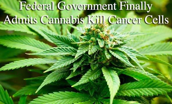 Cannabis Heals feds confirmed marijuana kills cancer