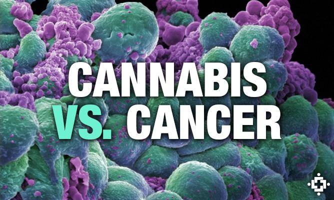 mmjdoctor using cannabis medicine to treat cancer