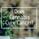 Cannabis and Cancer