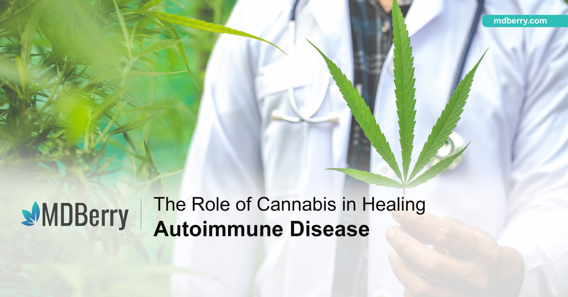 Cannabis and autoimmune disease