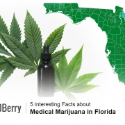 Marijuana in Florida