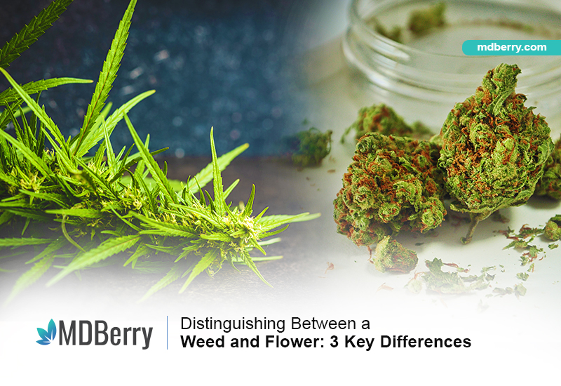 Weed and Flower